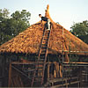 Thatching in Fort Worth Zoo, Texas USA